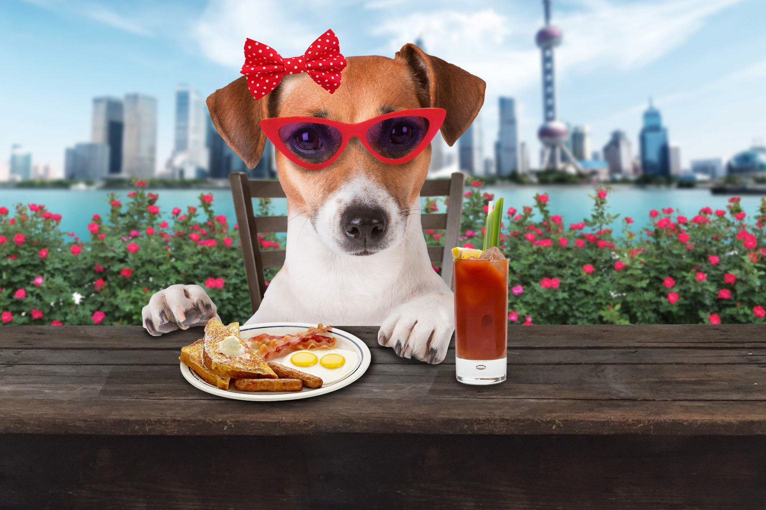 The List]: A Human's Guide to Dog-Friendly Venues | SmartShanghai
