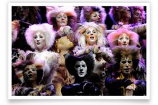 CATS CATS CATS CATS CATS The Musical Coming in June